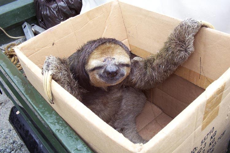 smiling-sloth