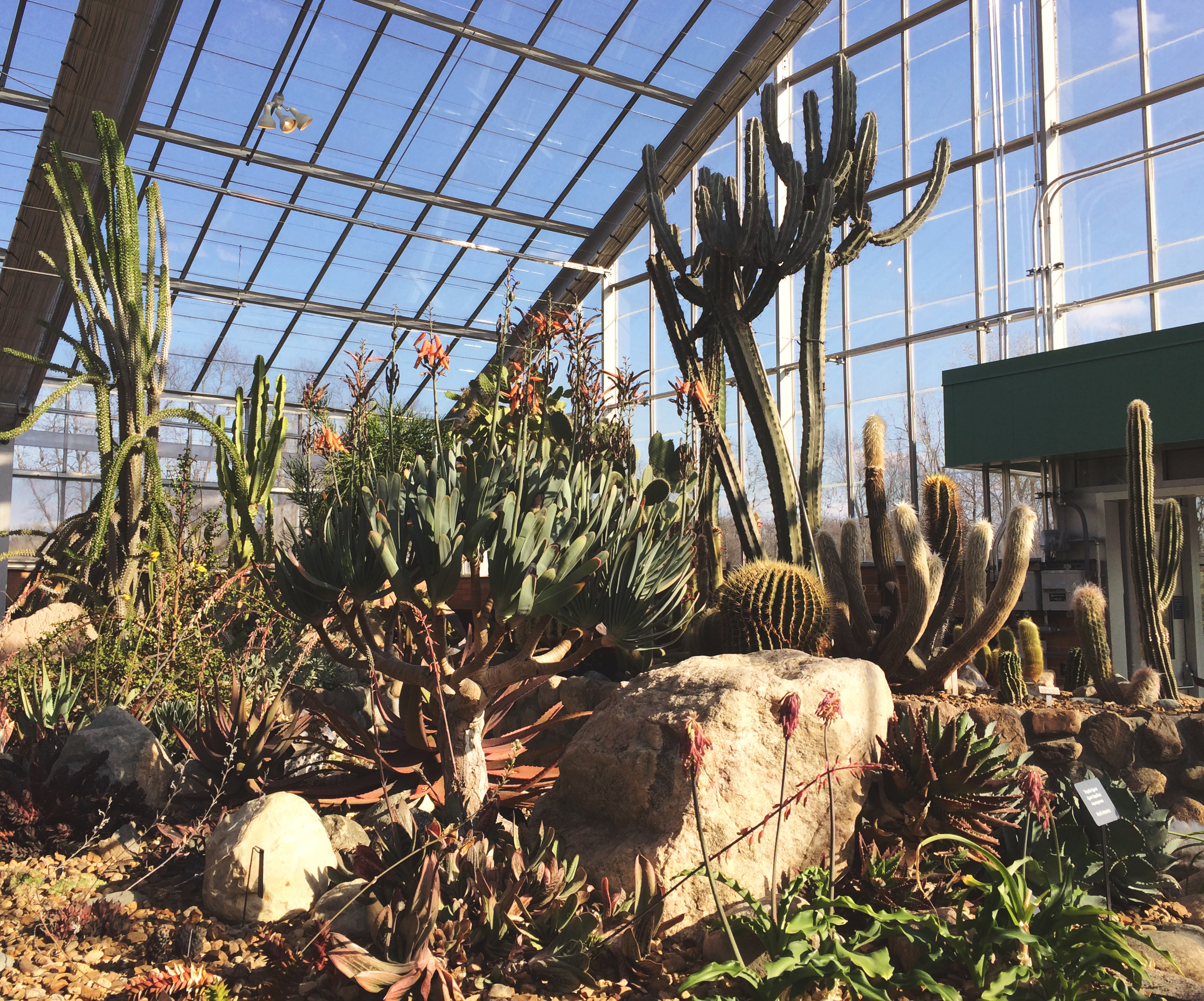 matthaei botanical gardens |